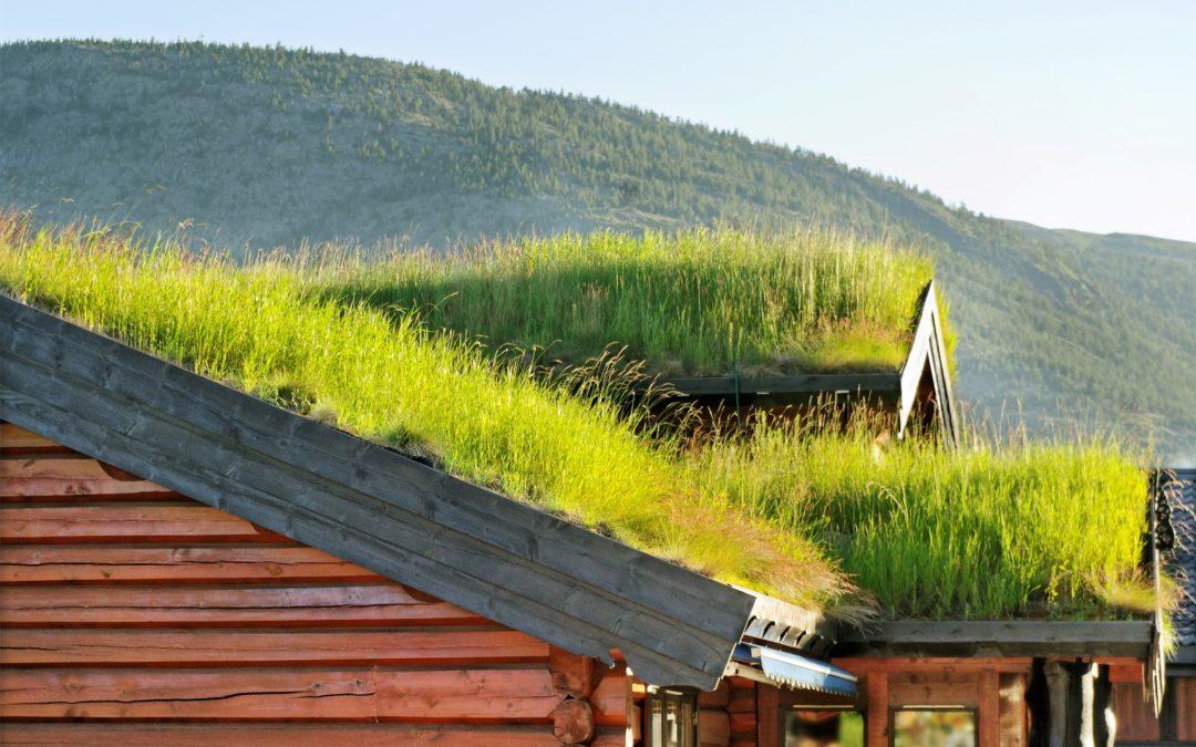 Natürlich und modern: das Gründach